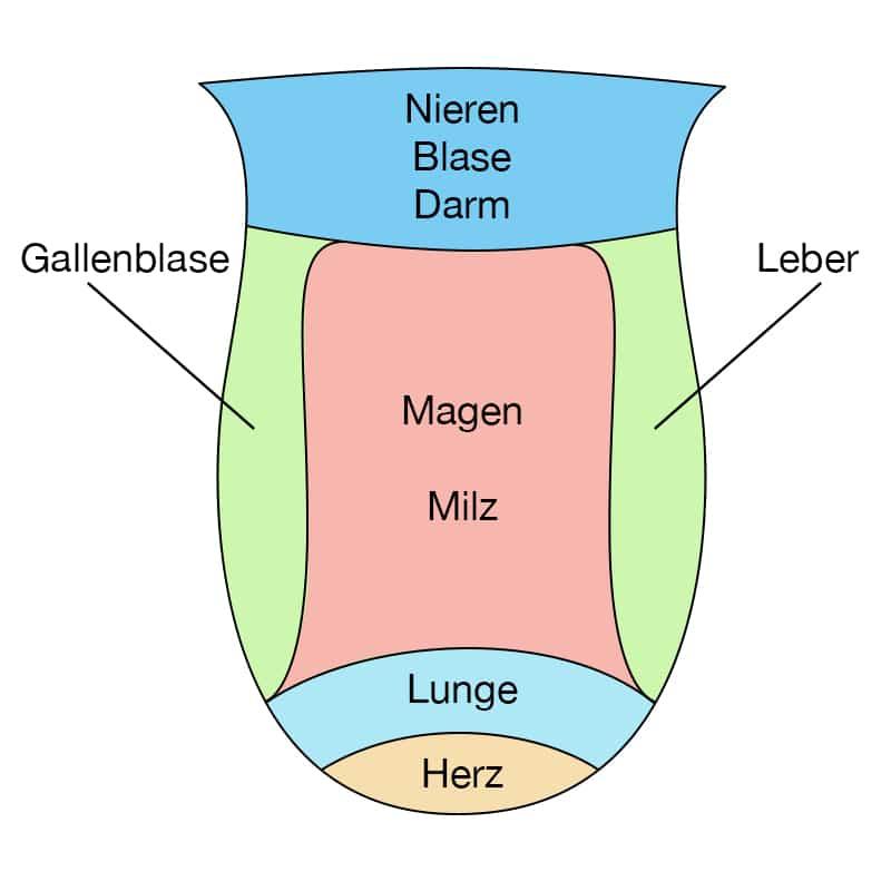 Zungendiagnostik TCM