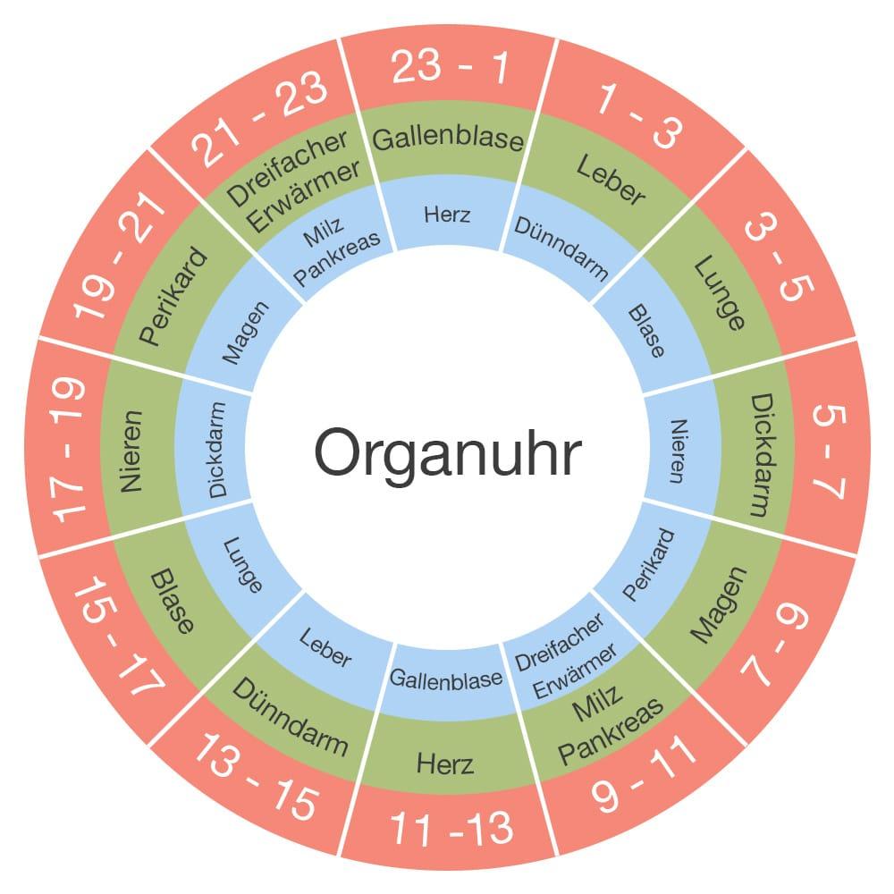 Die Organuhr: Was sie ist und wie man sie verwenden kann 1