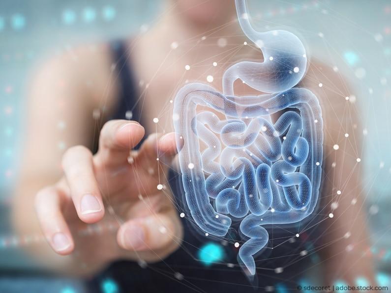 Der Darm und sein Einfluss auf die Hormone